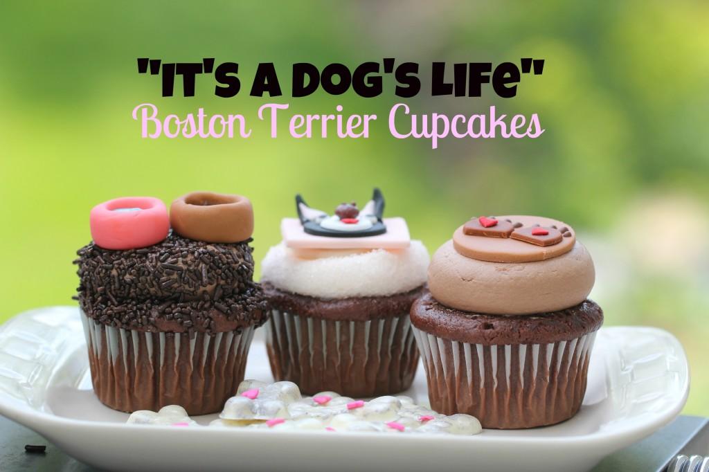 Stellas Birthday Bash Boston Terrier Cupcakes